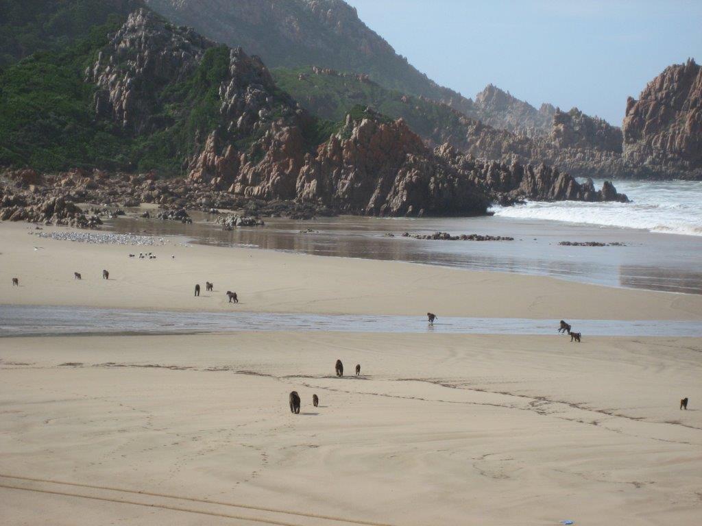 baboons-on-the-beach-008