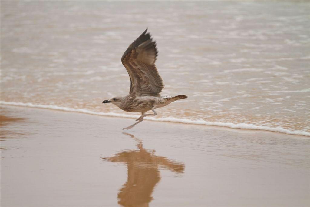 noetzie-beach-seagull