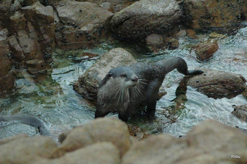 otters-at-noetzie-photo-by-robin-carpenter-frank-3