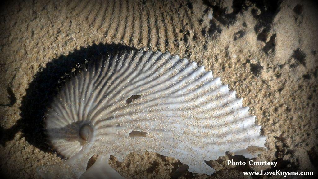 Noetzie-shell-photo-by-LoveKnysna.com_