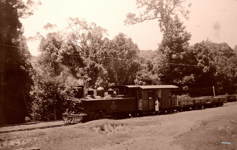 The Forest to the Village Coffee Pot Train