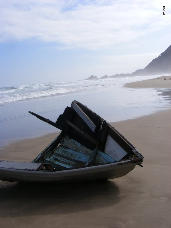 beach flotsam